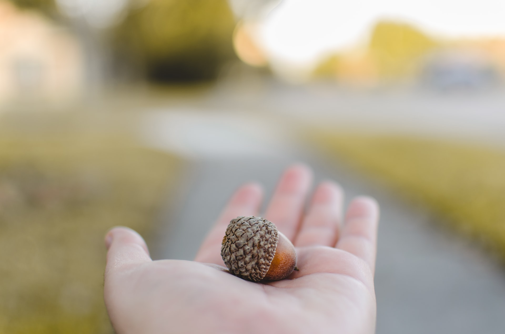 A hand holding an acorn