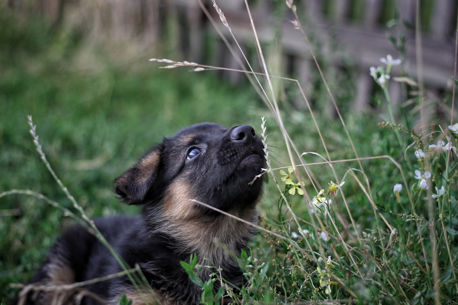 A puppy looking up